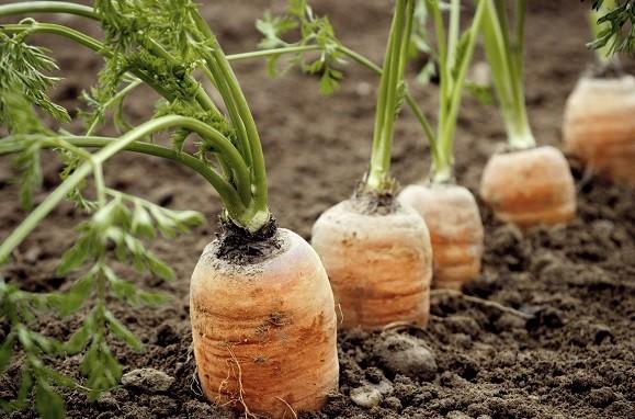 Ekel-Erbsen und plöde Paprika?! 5 Tipps, Gemüse in deinen Alltag zu integrieren! (5 a day)